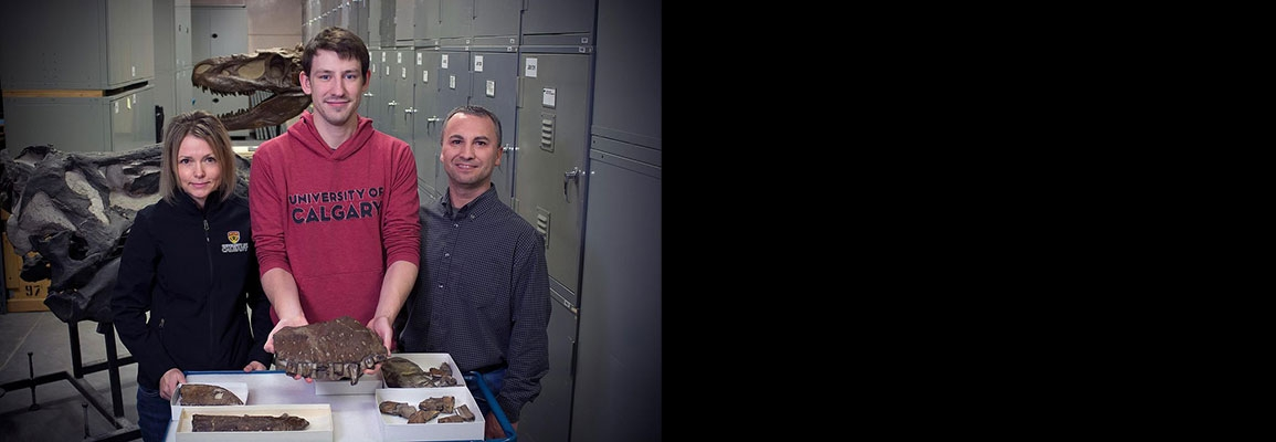 Darla Zelenitsky, Jared Voris and François Therrien stand with the Thanatotheristes fossils. (Royal Tyrrell Museum)
